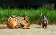 精彩摄影 小松鼠与星球大战 星球大战玩具趣味摄影壁纸 摄影壁纸