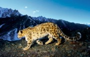 Snow Leopard自带 1 14 Snow Leopard自带 系统壁纸