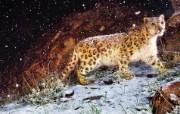 Snow Leopard自带 1 13 Snow Leopard自带 系统壁纸