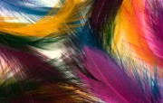 彩色羽毛和翅膀宽屏壁纸 1920x1200 壁纸1 彩色羽毛和翅膀宽屏壁 系统壁纸