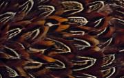 彩色羽毛和翅膀宽屏壁纸 1920x1200 壁纸5 彩色羽毛和翅膀宽屏壁 系统壁纸
