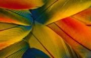 彩色羽毛和翅膀宽屏壁纸 1920x1200 壁纸11 彩色羽毛和翅膀宽屏壁 系统壁纸