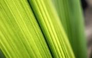 高清宽屏植物风光静物摄影壁纸 2009 09 26 壁纸16 高清宽屏植物风光静物 系统壁纸