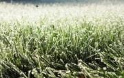 高清宽屏植物风光静物摄影壁纸 2009 09 26 壁纸22 高清宽屏植物风光静物 系统壁纸