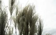 高清宽屏植物风光静物摄影壁纸 2009 09 26 壁纸23 高清宽屏植物风光静物 系统壁纸