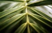 高清宽屏植物风光摄影壁纸 2009 09 26 壁纸1 高清宽屏植物风光摄影 系统壁纸