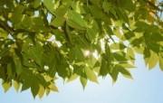 高清宽屏植物风光摄影壁纸 2009 09 26 壁纸2 高清宽屏植物风光摄影 系统壁纸