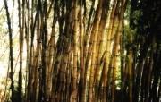 高清宽屏植物风光摄影壁纸 2009 09 26 壁纸3 高清宽屏植物风光摄影 系统壁纸