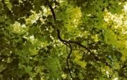 高清宽屏植物风光摄影壁纸 2009 09 26 壁纸4 高清宽屏植物风光摄影 系统壁纸