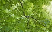 高清宽屏植物风光摄影壁纸 2009 09 26 壁纸5 高清宽屏植物风光摄影 系统壁纸