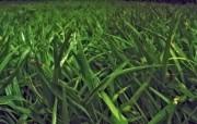高清宽屏植物风光摄影壁纸 2009 09 26 壁纸6 高清宽屏植物风光摄影 系统壁纸