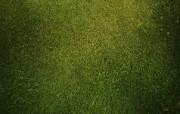 高清宽屏植物风光摄影壁纸 2009 09 26 壁纸10 高清宽屏植物风光摄影 系统壁纸