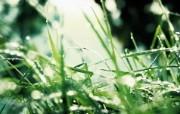 高清宽屏植物风光摄影壁纸 2009 09 26 壁纸17 高清宽屏植物风光摄影 系统壁纸
