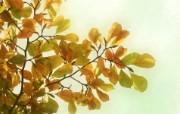 高清宽屏植物风光摄影壁纸 2009 09 26 壁纸22 高清宽屏植物风光摄影 系统壁纸