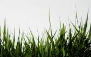 高清宽屏植物风光摄影壁纸 2009 09 26 壁纸24 高清宽屏植物风光摄影 系统壁纸