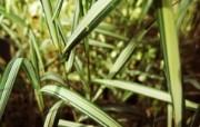 高清宽屏植物风光摄影壁纸 2009 09 26 壁纸50 高清宽屏植物风光摄影 系统壁纸