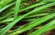 高清宽屏植物风光摄影壁纸 2009 09 26 壁纸51 高清宽屏植物风光摄影 系统壁纸