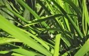 高清宽屏植物风光摄影壁纸 2009 09 26 壁纸52 高清宽屏植物风光摄影 系统壁纸