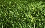 高清宽屏植物风光摄影壁纸 2009 09 26 壁纸75 高清宽屏植物风光摄影 系统壁纸