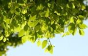 高清宽屏植物风光摄影壁纸 2009 09 26 壁纸29 高清宽屏植物风光摄影 系统壁纸