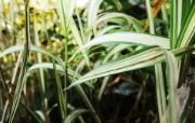 高清宽屏植物风光摄影壁纸 2009 09 26 壁纸54 高清宽屏植物风光摄影 系统壁纸