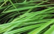 高清宽屏植物风光摄影壁纸 2009 09 26 壁纸55 高清宽屏植物风光摄影 系统壁纸