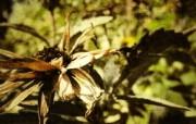 高清宽屏植物风光摄影壁纸 2009 09 26 壁纸60 高清宽屏植物风光摄影 系统壁纸