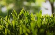 高清宽屏植物风光摄影壁纸 2009 09 26 壁纸38 高清宽屏植物风光摄影 系统壁纸