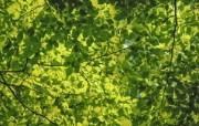 高清宽屏植物风光摄影壁纸 2009 09 26 壁纸39 高清宽屏植物风光摄影 系统壁纸
