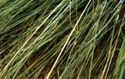 高清宽屏植物风光摄影壁纸 2009 09 26 壁纸43 高清宽屏植物风光摄影 系统壁纸