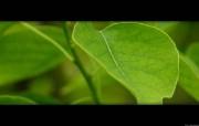 高清植物宽屏 25 系统壁纸