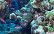 海底漫游宽屏壁纸 系统壁纸