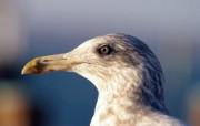 经典精美风光风景动物生物摄影高清宽屏壁纸 九 壁纸11 经典精美风光风景动物 系统壁纸