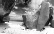 经典精美风光风景动物生物摄影高清宽屏壁纸 九 壁纸20 经典精美风光风景动物 系统壁纸