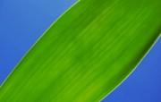 经典精美风光风景动物生物摄影高清宽屏壁纸 九 壁纸23 经典精美风光风景动物 系统壁纸