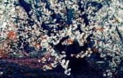 经典精美风光风景动物生物摄影高清宽屏壁纸 九 壁纸80 经典精美风光风景动物 系统壁纸
