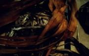 精品经典 实物摄影电脑PS宽屏壁纸 四 壁纸13 精品经典:实物摄影电 系统壁纸