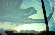 精品经典 实物摄影电脑PS宽屏壁纸 四 壁纸40 精品经典:实物摄影电 系统壁纸