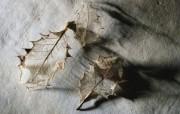 冷调风格 动物植物标本摄影宽屏壁纸 壁纸2 冷调风格 动物植物标 系统壁纸