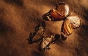 冷调风格 动物植物标本摄影宽屏壁纸 壁纸7 冷调风格 动物植物标 系统壁纸
