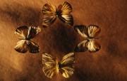 冷调风格 动物植物标本摄影宽屏壁纸 壁纸8 冷调风格 动物植物标 系统壁纸