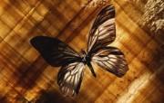 冷调风格 动物植物标本摄影宽屏壁纸 壁纸12 冷调风格 动物植物标 系统壁纸