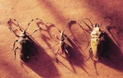 冷调风格 动物植物标本摄影宽屏壁纸 壁纸73 冷调风格 动物植物标 系统壁纸