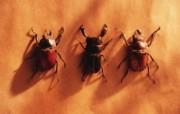 冷调风格 动物植物标本摄影宽屏壁纸 壁纸74 冷调风格 动物植物标 系统壁纸