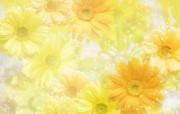 朦胧花朵柔美 宽屏壁 系统壁纸