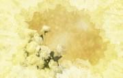 朦胧花朵柔美 宽屏壁纸 壁纸5 朦胧花朵柔美 宽屏壁 系统壁纸