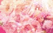朦胧花朵柔美 宽屏壁纸 壁纸25 朦胧花朵柔美 宽屏壁 系统壁纸