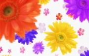 朦胧花朵柔美 宽屏壁纸 壁纸49 朦胧花朵柔美 宽屏壁 系统壁纸