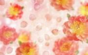 朦胧花朵柔美 宽屏壁纸 壁纸50 朦胧花朵柔美 宽屏壁 系统壁纸