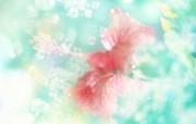 朦胧花朵柔美 宽屏壁纸 壁纸51 朦胧花朵柔美 宽屏壁 系统壁纸